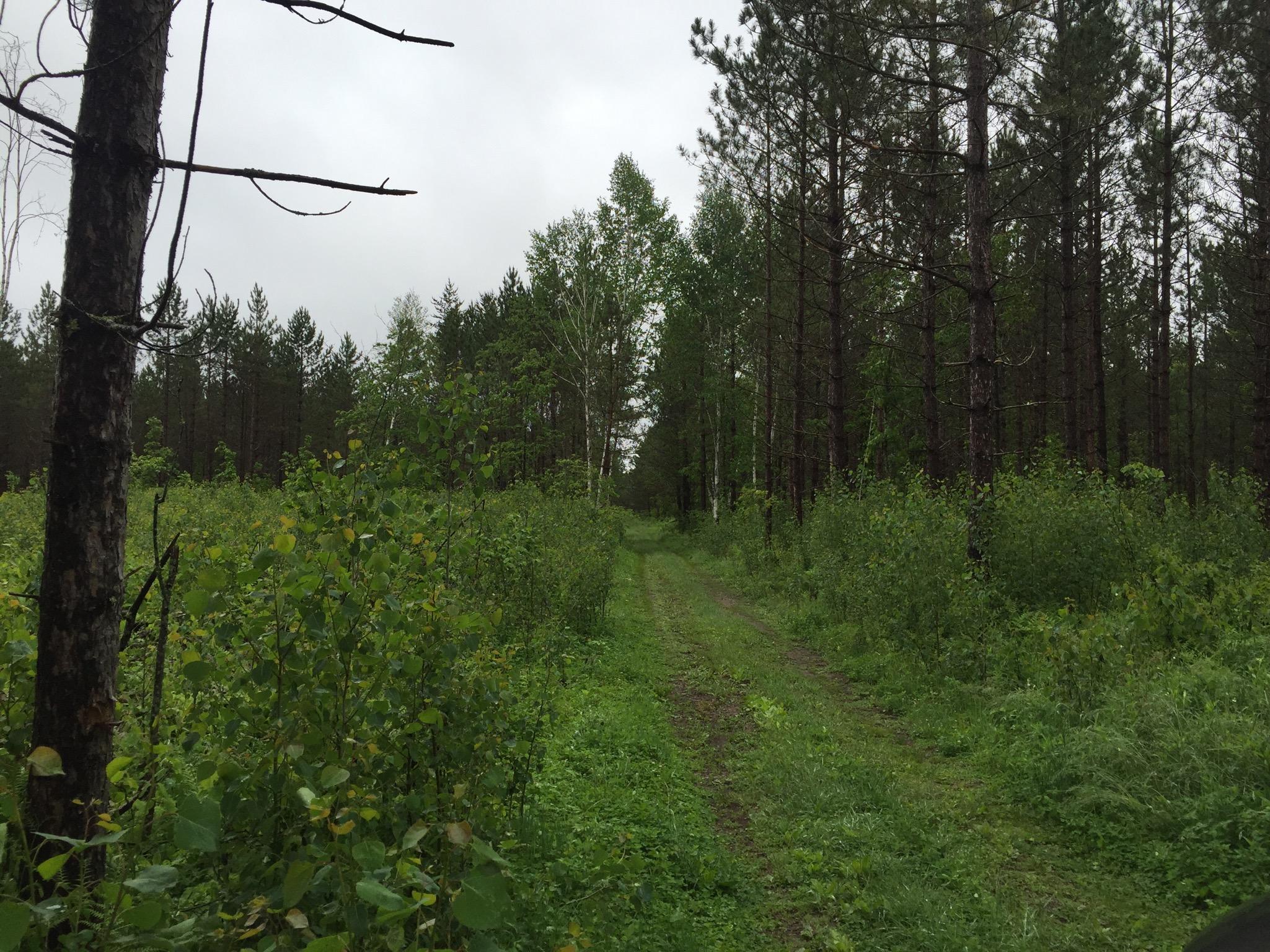 NESW Forest Rd 3845 NE, Moose Lake Twp, Pennington