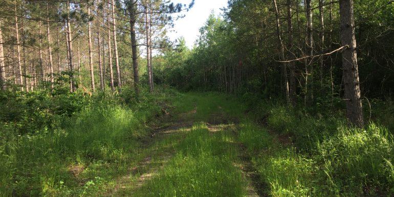 SWqtr-trail2