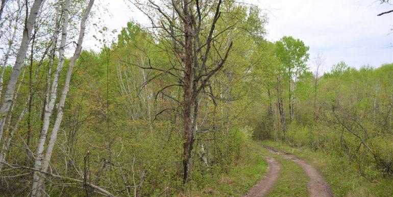 AdjRd&trees