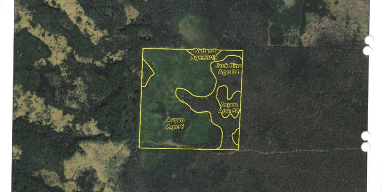 3-Timber Cover Map